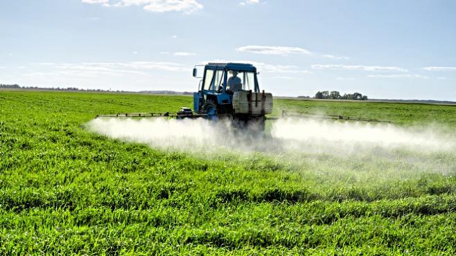 La Pratica dell'Irrorazione delle Colture con gli Erbicidi per la Maturazione Uniforme degli OGM