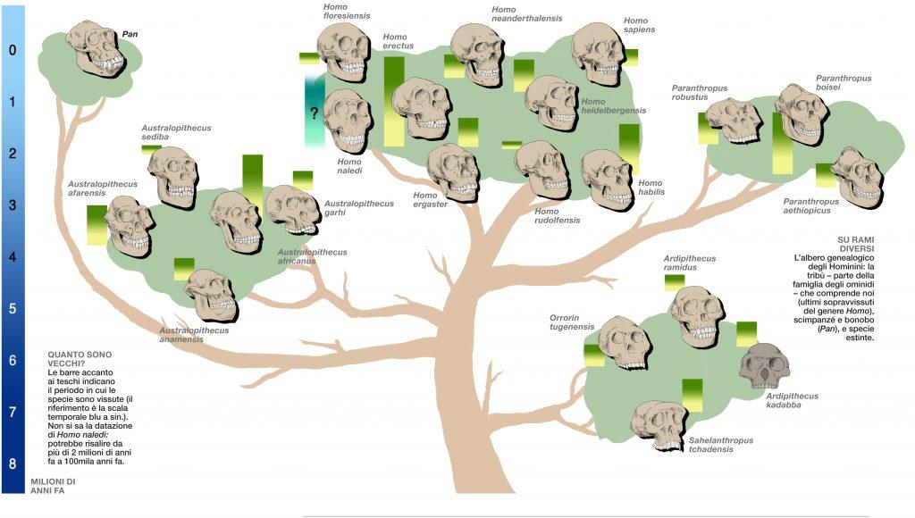 Evoluzione Umana a Cespuglio