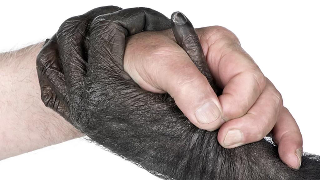 Scimpanzè e Uomo